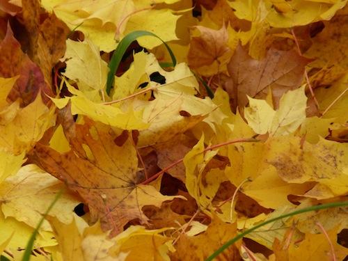 Wir begrüßen den Herbst